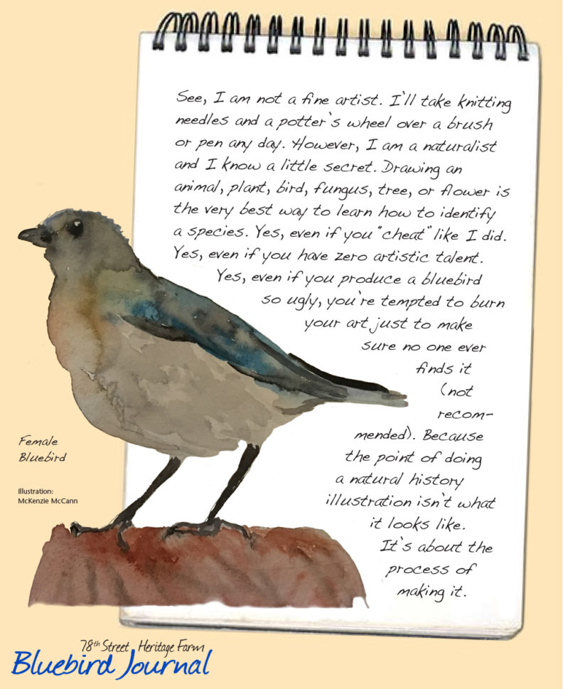 Bluebird Journal October, 2018. page 2 with female bird painting; text about not being an artist but the importance of learning from making the painting.