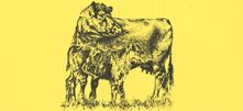 yellowbeefpic