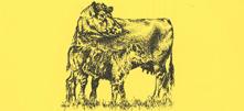 yellowbeefpic