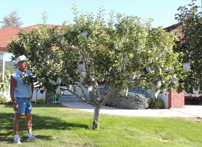 The Primary Non Pesticidal Strategy Yakima County
