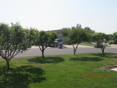 Multiple Backyard Fruit Trees ...