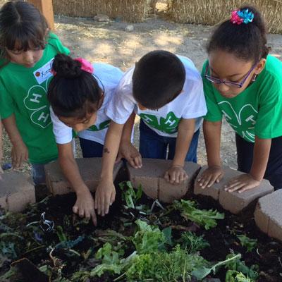 4-H youth gardening