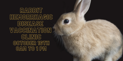 Rabbit Hemorrhagic Disease Vaccination Clinic is on October 16th from 8AM to 1PM