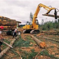 Pacific County Forestry Photo