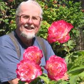 partridge_roses175x175