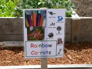 a garden sign for rainbow carrots