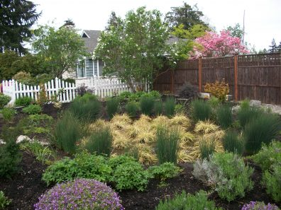 Rain Garden Design Wa State on rain art drawings, rain gutter downspout design, dry well design, rain roses, rain water design, french drain design, rain construction, rain illustration, rain barrels, gasification design, bioswale design, rain gardens 101, rain harvesting system design,