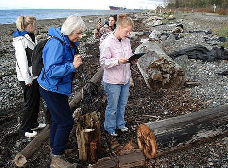 Surveying Creosote Logs on the Coast