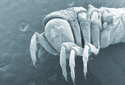 """""""Caddisfly Larvae"""" - University Bug Scope, University of Illinois"""