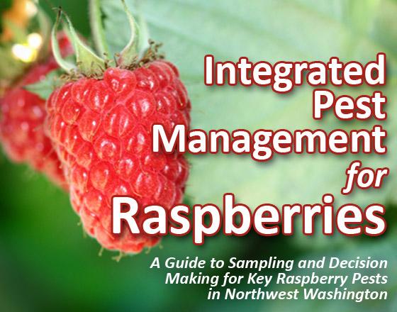 IPM Raspberry title image