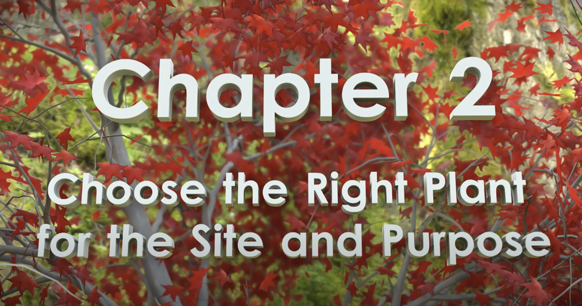 Chapter 2 title card of video