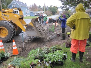 Bulldozer delivering rock for drainage to rain garden in Port Townsend.