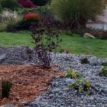 Rain garden photo: IMG_20151030_124101314