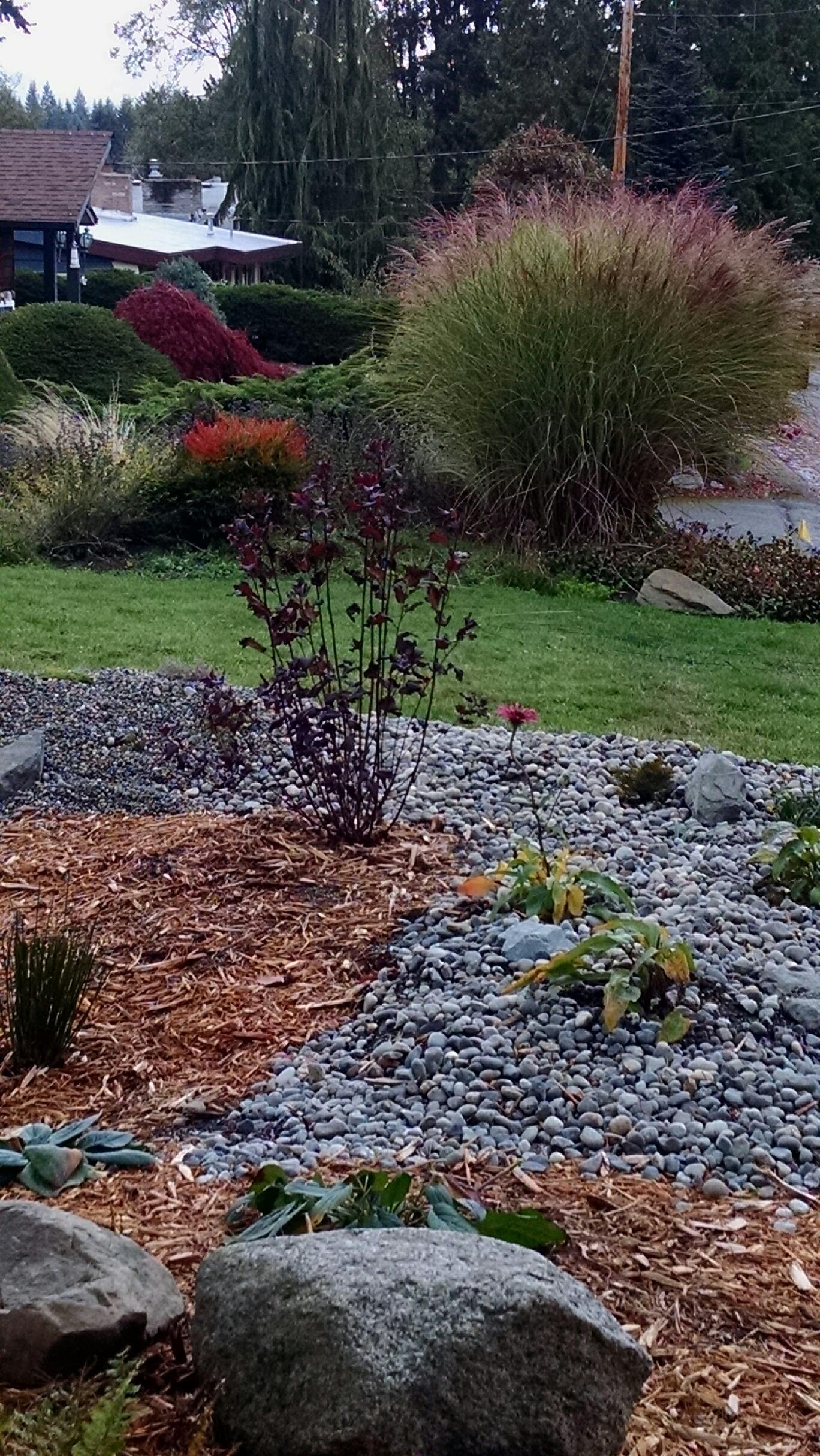 rain gardens in your county
