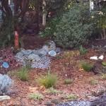 Rain garden photo: IMG_20151121_132100262