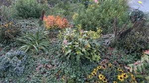 Rain garden at Point Hudson, Jefferson County. Photo: E. Guttman1009150832f