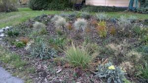 Rain garden. Garfield Street, Port Townsend. Photo: E. Guttman1009150938a