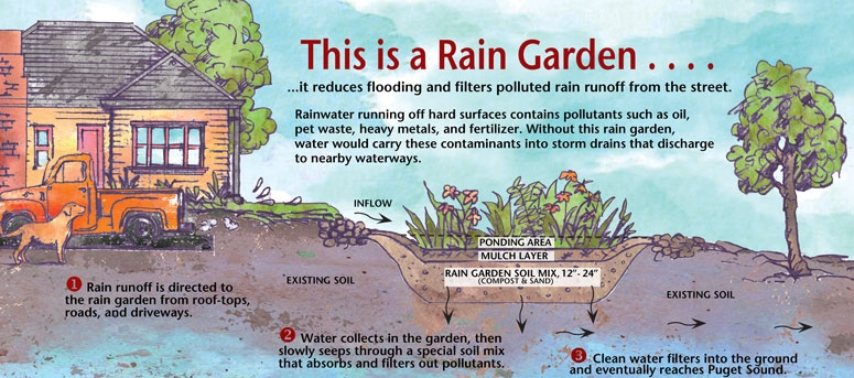 Rain garden illustration showing runoff coming from a house into the rain garden. Arrows show how the water infiltrates into the ground.