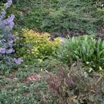 Rain garden photo: E. Guttman1009150833f