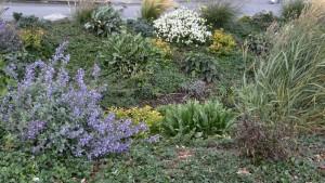 Rain garden. Photo: E. Guttman1009150834