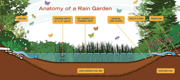 Rain garden schematic showing the features of a rain garden.