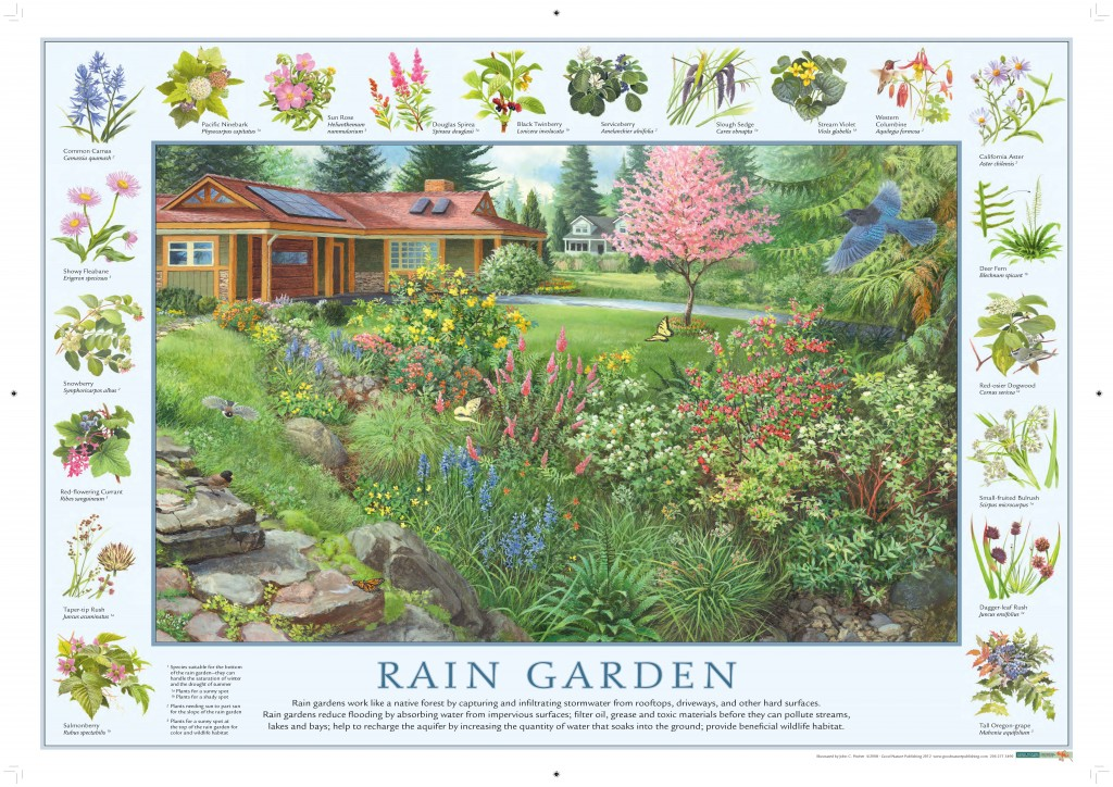 Rain Garden illustration available for free download.