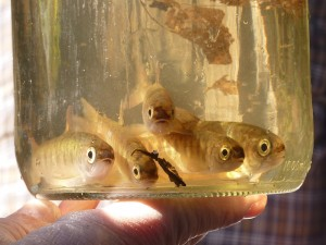 Jar with fish in it