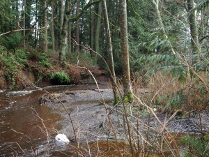Chimacum Creek, Jefferson County, WA