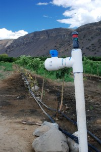Drip_Irrigation_in_Apple_Orchard