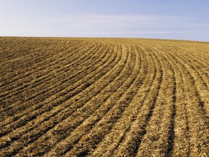 Stubble Tillage