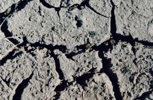 Cracked dry ground. Photo DL McNamara