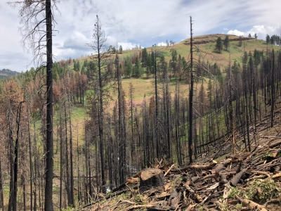 Burnt hillside with trees in background.