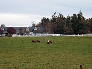 Cows 2 copy