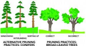 CuttingPruningTrees