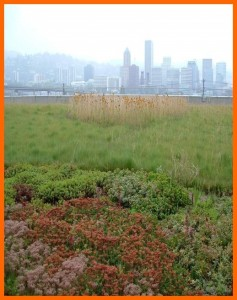 Green Roof - Erica G