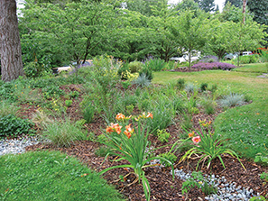 big rain garden overview copy