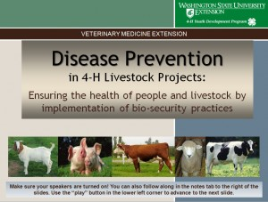 Disease Prevention in 4-H Livestock Projects