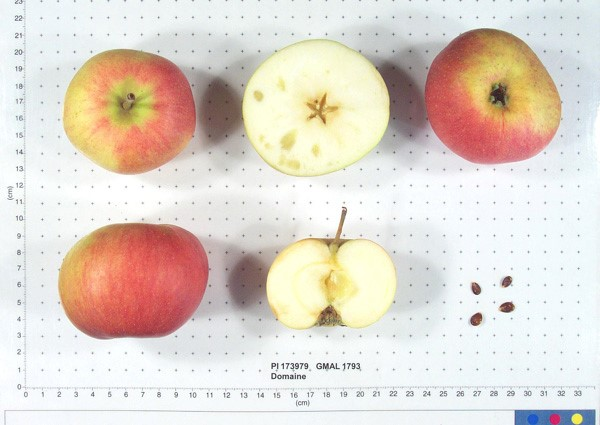 Cider Apple Variety: Domaines