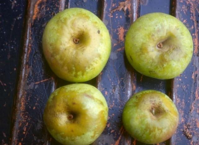 Cider Apple Variety: Muscadet-de-Dieppe