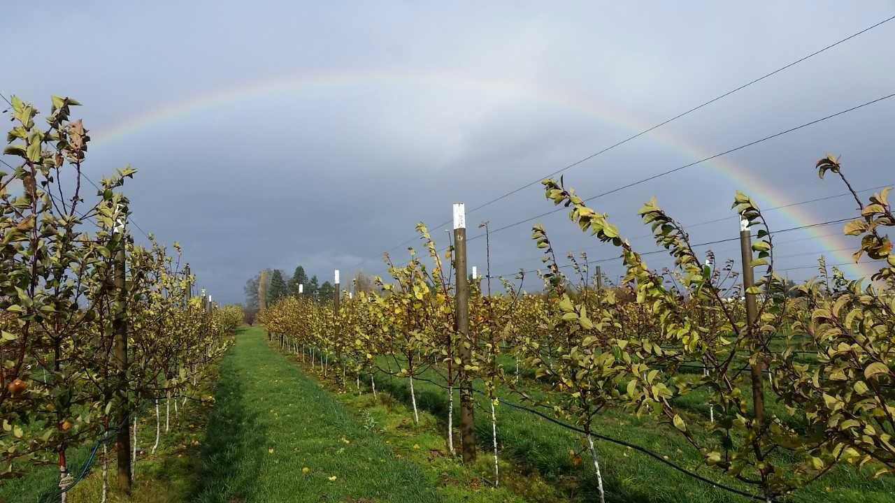 Picture of young cider orchard