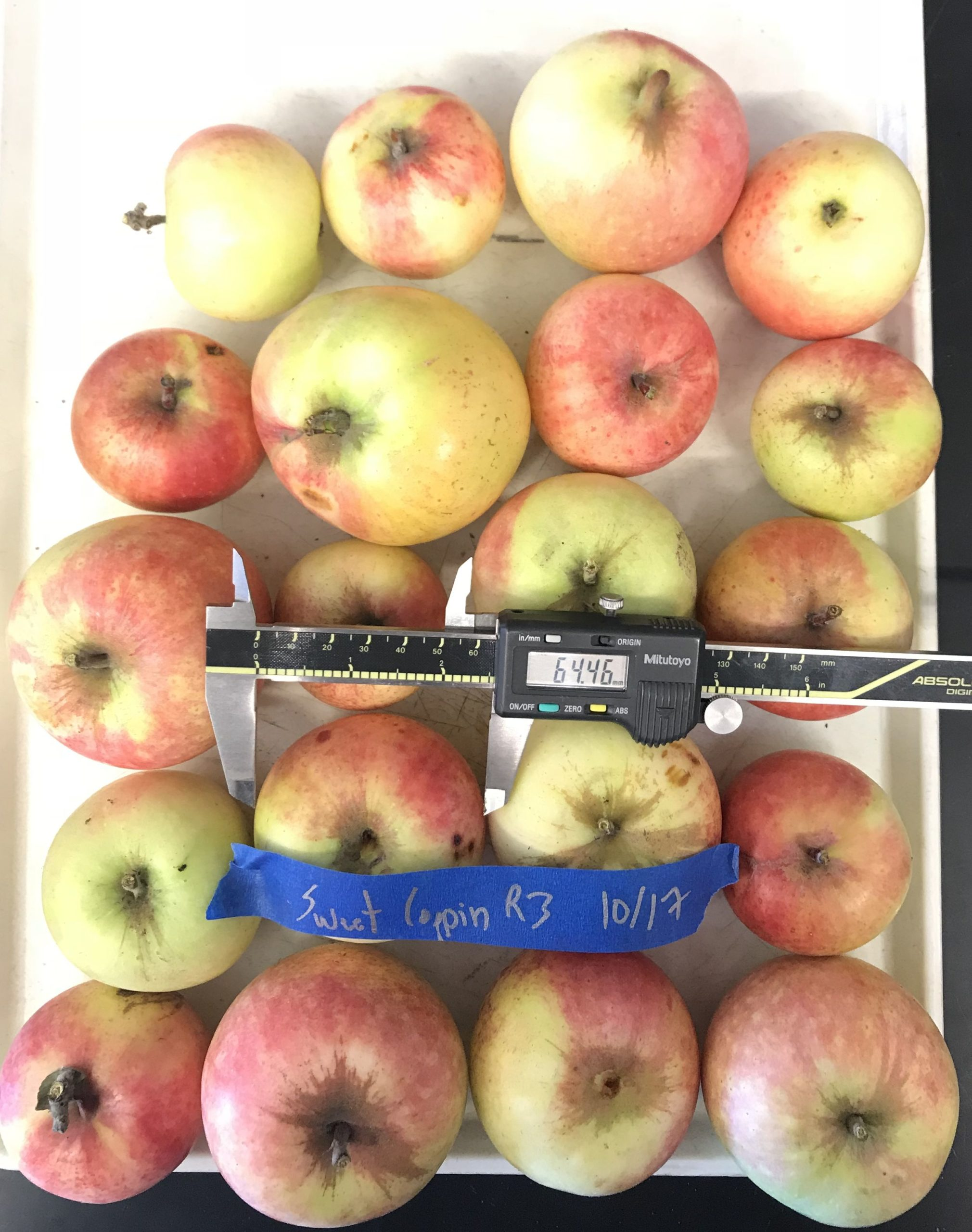 Cider Apple Variety: Sweet-Coppin