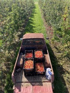 Apple baskets that are loaded in a truck