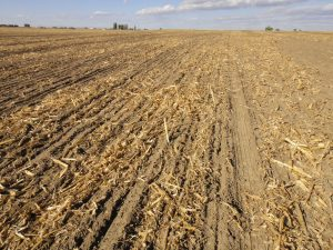 Previous corn field disked to smooth over dammer diker holes, then planted. Note bare soil.
