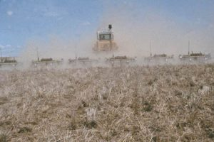 Rodweeding in a field