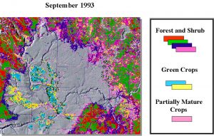 AVHRR image from September 1993. Landscape distribution of green vegetation.