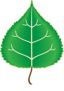 Feedstock team logo; graphic of a green poplar leaf, including the veins