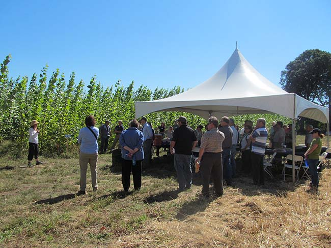 A group of men and women gathered under a tent looking at a row of poplars.