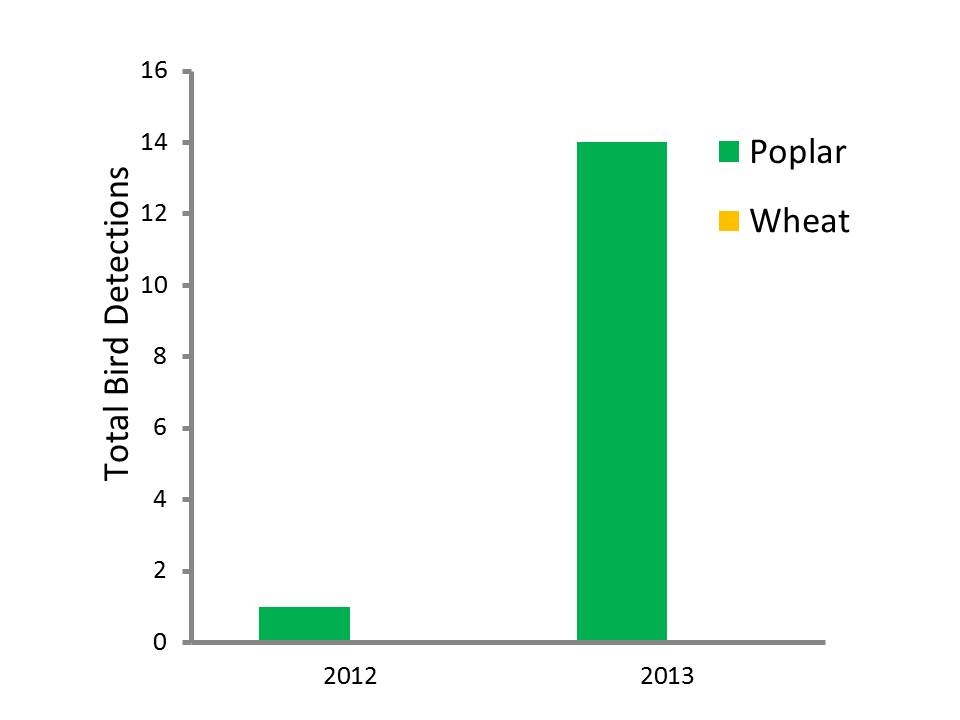 Bar graph comparing the number of birds found in poplar verses wheat crops.