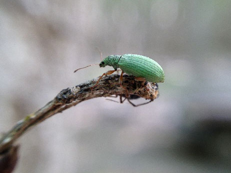 A beetle on a branch
