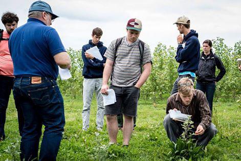 Students examining the poplar trees